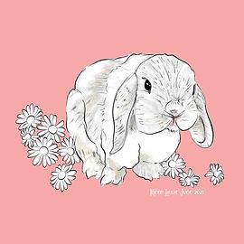 lop-ear-bunny-w-daisies.jpg