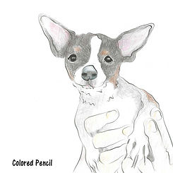 chihuahua-in-hands-coloredPencil-2.jpg