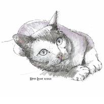 Resting cat illustration by Karen Little  of Sketch-Views