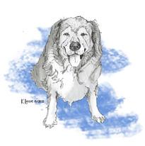 Big, Fluffy Dog by Karen Little of Sketch-Views
