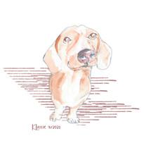 Doxie puppy by Karen Little of Sketch-Views
