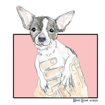 Chihuahua held in hands illustration by Karen Little  of Sketch-Views