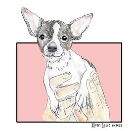 chihuahua-in-hands.jpg