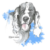 Archie, a big black and white neighborhood dog by Karen Little  of Sketch-Views