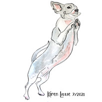 Dancing Chihuahua illustration by Karen Little  of Sketch-Views