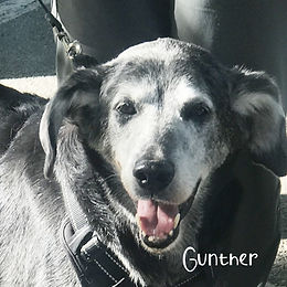 pups-to-post-on-wix-gunther.jpg