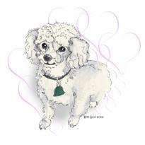 Sketch of a cute, miniature poodle