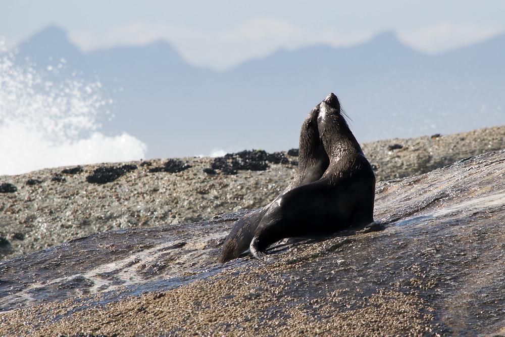 Seals 2