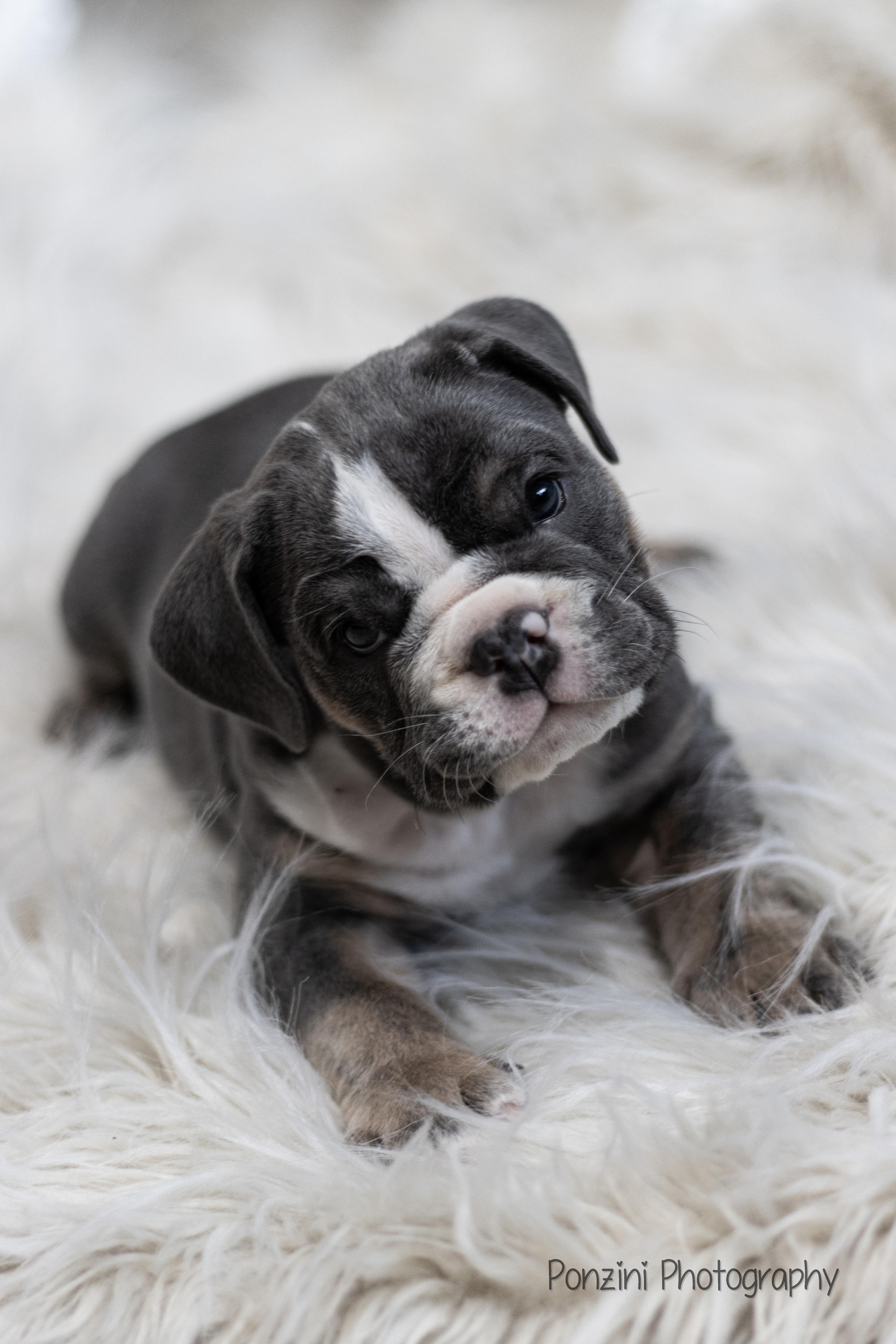 Fur baby photos!
