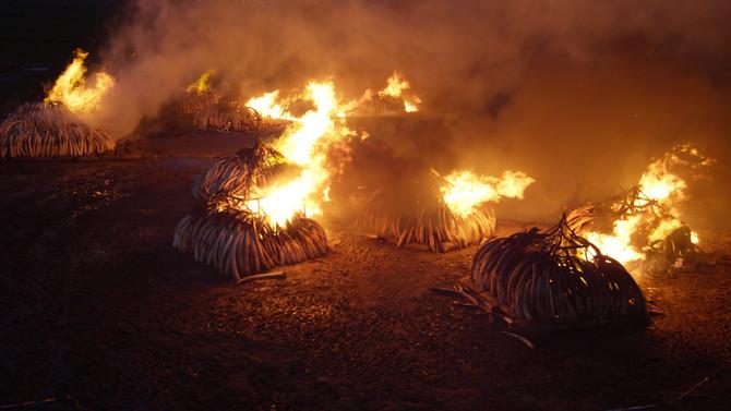 Flying at the KWS ivory burn