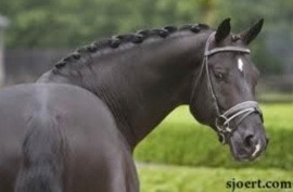 HOW TO: DRESSAGE BRAIDS