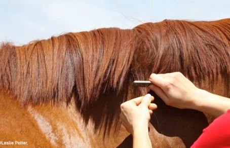 HOW TO PULL YOUR HORSE'S MANE