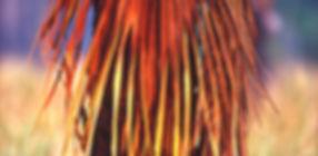 Carnarvon Fan Palm