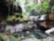 Springs support a lush growth of moss and drive a permanent waterfall in the Moss Garden, Carnarvon Gorge.
