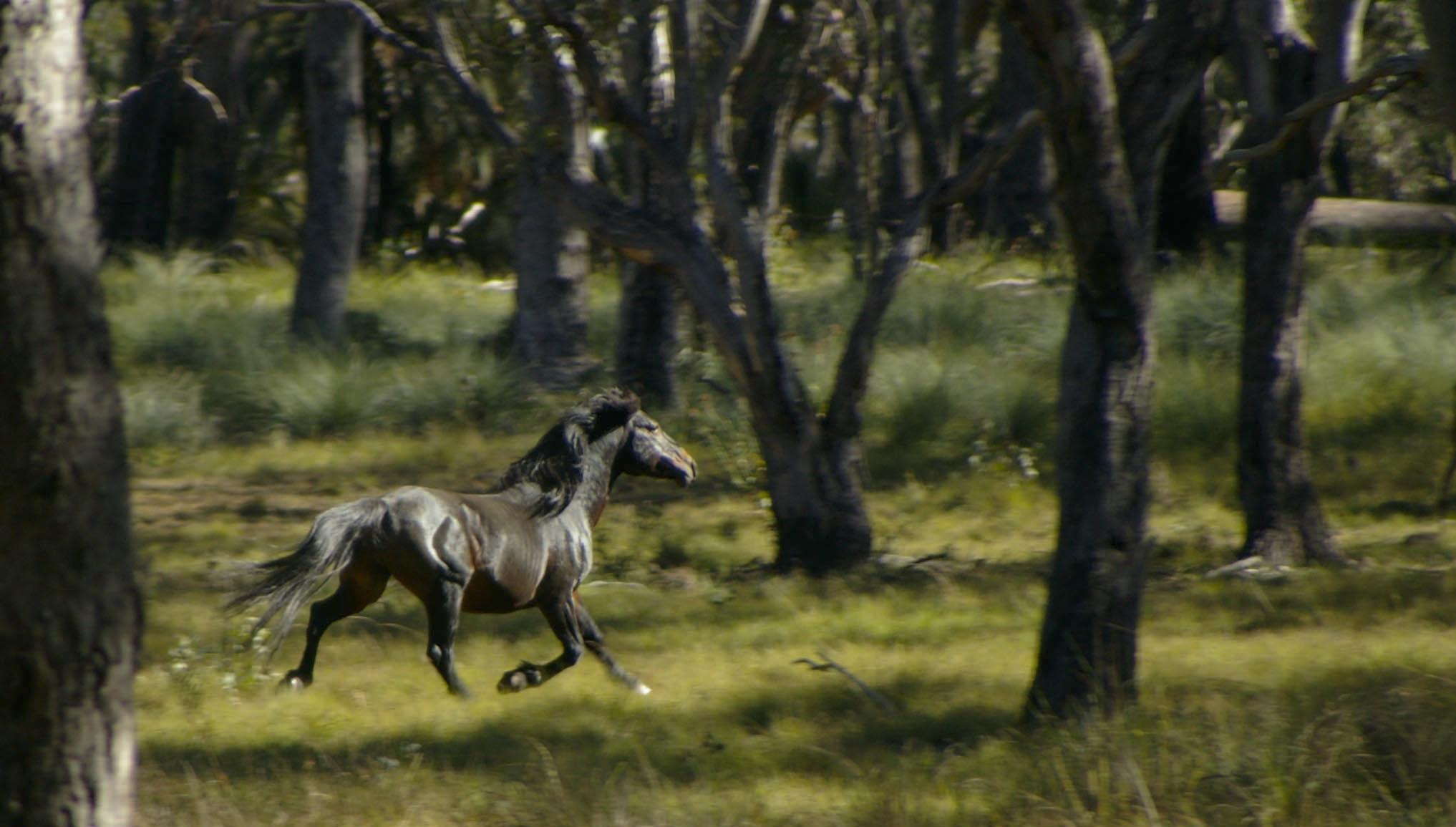 Feral Pony