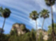 Carnarvon fan palms and sandstone cliffs, Carnarvon Gorge.