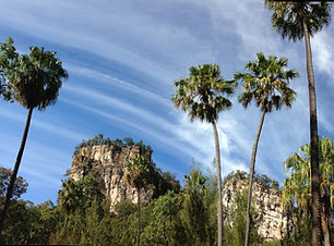 Carnarvon fan palms and sandstone cliffs, Carnarvon Gorge.