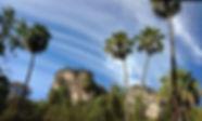 Tall Carnarvon fan palms frame towering cliffs in Carnarvon Gorge.