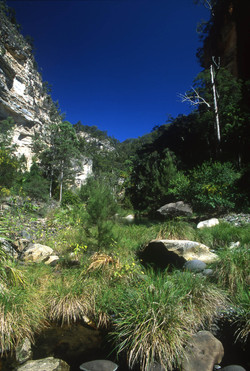 Creek Bed, Carnarvon Gorge