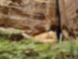 Nature Trail, Carnarvon Gorge.