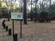 Cycads and trees stand tall behind a welcome sign in the Carnarvon Gorge Camping Area.