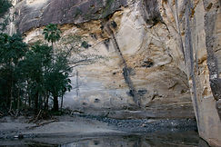Palms and cliffs stand tall above Carnarvon Creek at Big Bend, Carnarvon Gorge