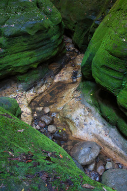 Warrumbah Gorge, Carnarvon Gorge.