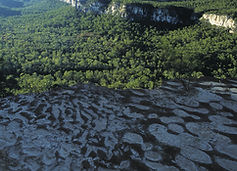 View from Boolimba Bluff, Carnarvon Gorge.