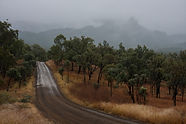 A grave road disappears towards cloudy cliffs in Carnarvon Gorge.