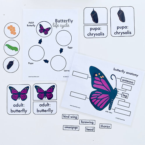 Butterfly Life Cycle & Anatomy