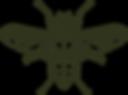 Diptera_Detail_transparent.png