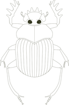 Coleoptera_Detail_transparent.png