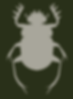 Coleoptera.PNG