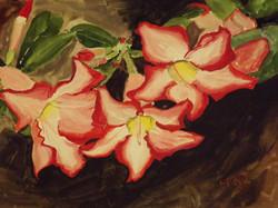 Desert Roses