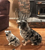 Lindy & Pup.jpg