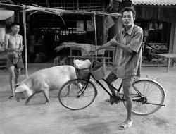 Paths of Chi Phut (Film)