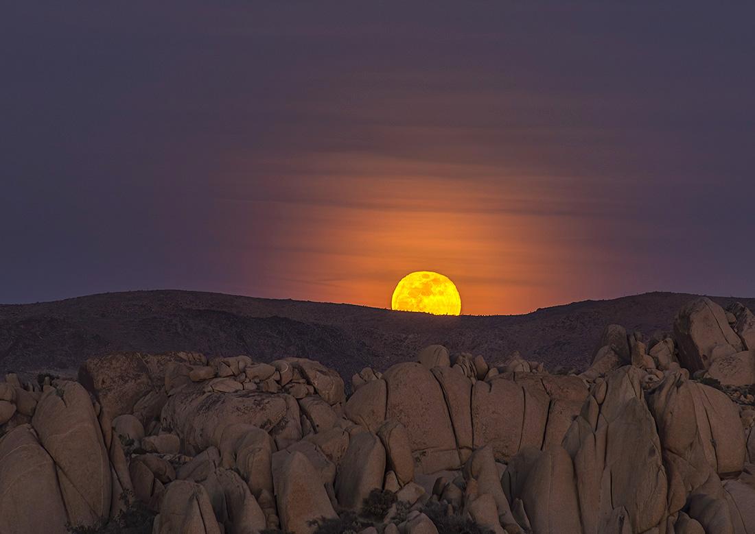 Moon Rise Over Joshua