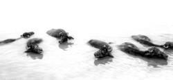 Water Buffalo (Film)