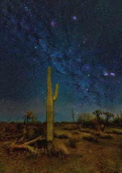 A Desert Dream