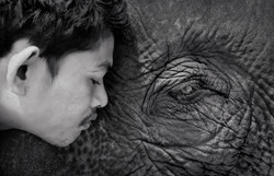 Mahout and Friend