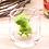 Thumbnail: Dinosaur tea infuser