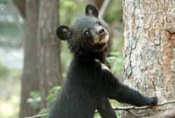 bear_cub_korea