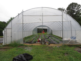 What's New at FreshGrown Farm