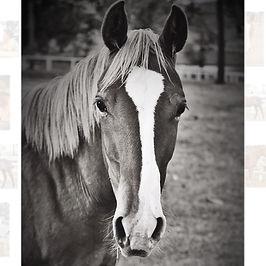 Home is where the horses are #quarterhor
