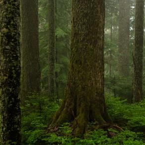 El hacer es la esperanza: los defensores del bosque de Fairy Creek (Arroyo de las hadas).