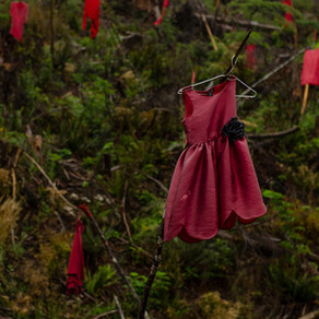 Red Dresses and Clear-Cuts: A Settler Bears Witness.