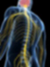 sparc-nerves-900px.jpg