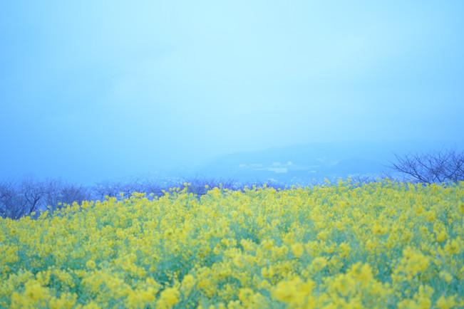 b01_ ミュゼオwashi_dsc07294-4.jpg