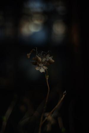 e03_ブラックラベル写真 2020-02-24 15 32 49.jpg