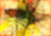 butterfly-744115__180.jpg